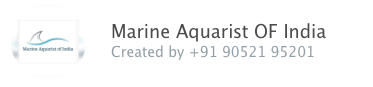 Marine Aquarist Group