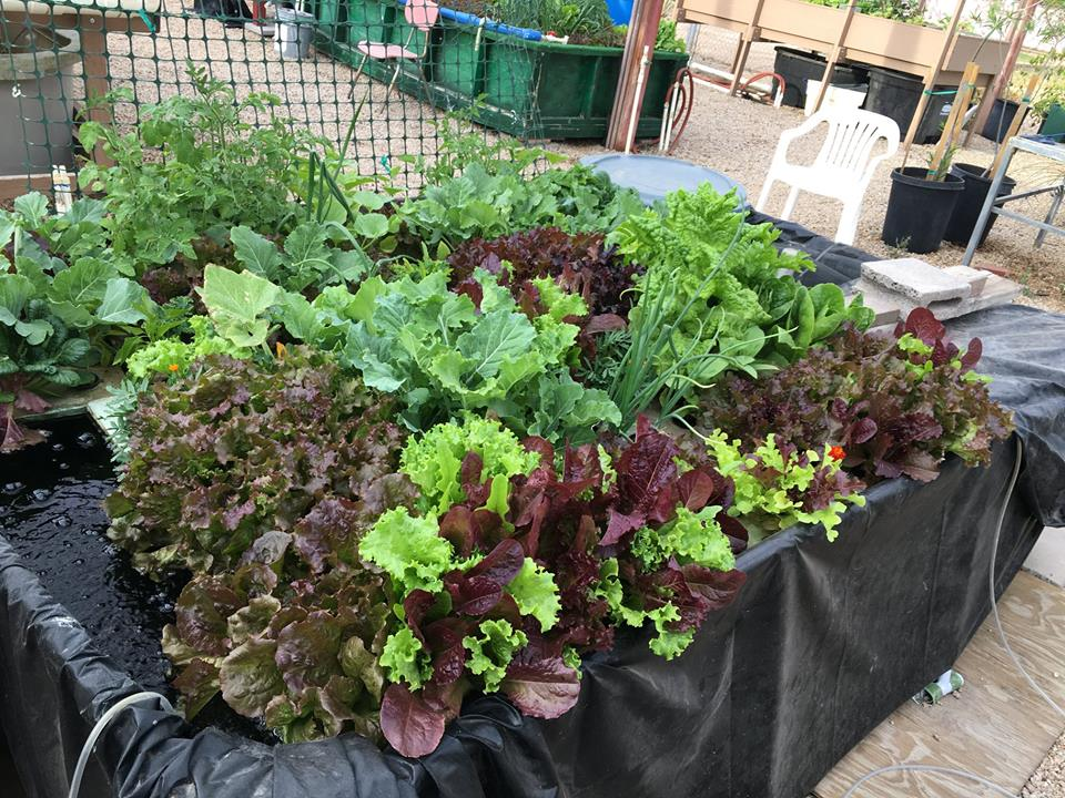 Aquaponics_Blogpost