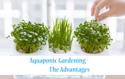 Aquaponic Gardening - The Advantages